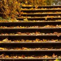 Лестница в осень :: Елена Четверик