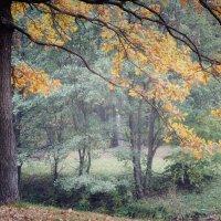 В волшебном лесу :: Инна Малявина
