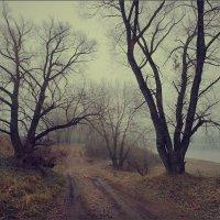 Осенняя дорога в тумане.. :: Алексей Макшаков