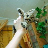 Маленький Соня :: Дмитрий