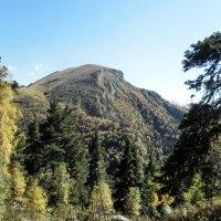 На горной тропе, в лесах Адыгеи :: Сергей Анатольевич