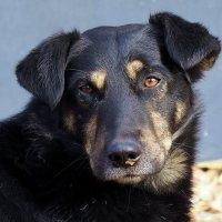 О чем грустит бездомный пес?... :: Александр Попов