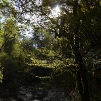 Сказочный лес :: Светлана Винокурова