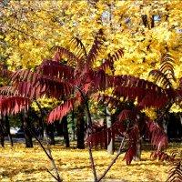 Багряные листья :: Татьяна Пальчикова