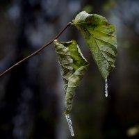 Осенние листья :: Вера