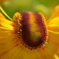 Цветы в нашем саду (этюд 12) :: Константин Жирнов