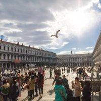 Чайка над площадью в Венеции :: Елена Троян