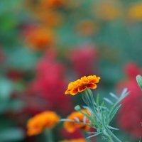 просто цветы :: Сергей Кондратович