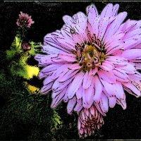 Хризантема на память :: Нина Корешкова