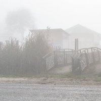 Утро туманное... :: Юлия Бабитко