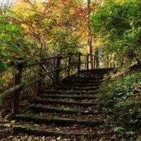 Лестница в осень :: Alexander Andronik