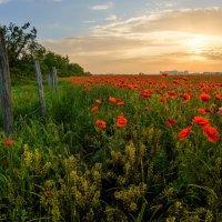 А на нейтральной полосе цветы необычайной красоты! :: Александр Плеханов