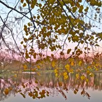 нежные вечерние краски осени :: Елена