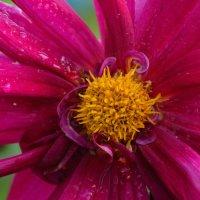 Цветы в нашем саду (этюд 16) :: Константин Жирнов