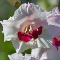 Цветы в нашем саду (этюд 17) :: Константин Жирнов