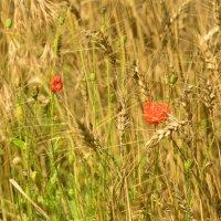 в поле :: Viktoriya Bilan