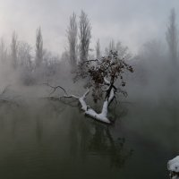 Холодное утро :: Александр Плеханов