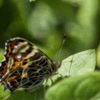 Бабочка :: Татьяна Н.