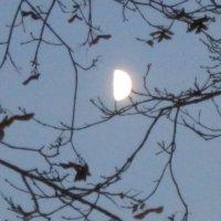 Ветви и луна :: Дмитрий Никитин