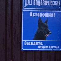 Злюкен собакен)) :: Екатерина Марфута