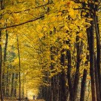 Осень :: Евгений Фомин