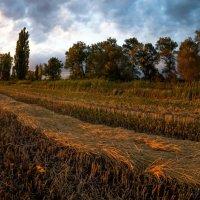 Закат в рисовом чеке :: Александр Плеханов