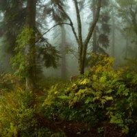 Сказка осеннего леса :: Александр Плеханов