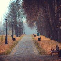 Осенняя аллея :: Наташа С
