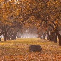 Осенняя пора... :: Наташа С