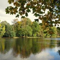 Осень-кудесница.... :: Валентина Жукова