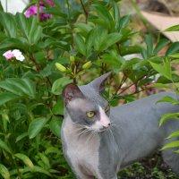 Когда кот, любит цветы! :: Дарья Кириллова