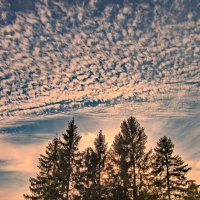 Закат за лесом :: Валерий Талашов