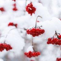 Краски зимы :: Юлия Пахомова
