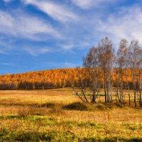Березняк на закате :: юрий Амосов