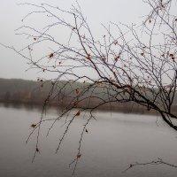 После тумана. :: Анатолий. Chesnavik.