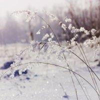 Мороз и солнце, день чудесный :: Ульяна Северинова Фотограф
