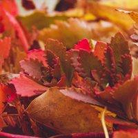 Осень [1] ♥ :: Tanya Kozlova