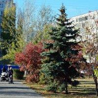 Разные цвета осени :: Александр