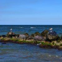 Азовское море :: Tatiana Kretova