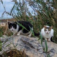 Бездомные-свободые коты :: Ирина Кеннинг