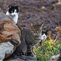 Бездомные-свободые коты :: Ирина Краснобрижая
