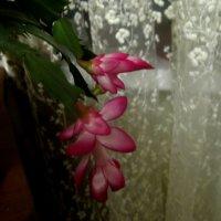 В доме моем такое украшение.. :: Елена Семигина