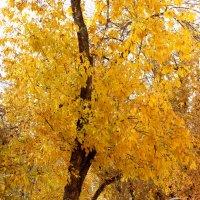 Красоты осени :: Светлана