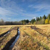 Для будущего урожая :: Валерий Талашов