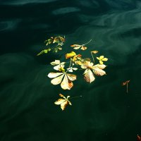 природа :: Murat Bukaev
