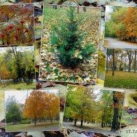 Времена года,октябрь в парке... :: Тамара (st.tamara)
