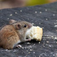 Про мышонка и булку :: Ната Волга