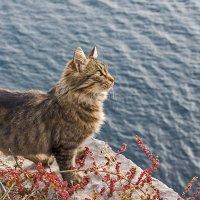 Бесстрашный кот - скалолаз :: Ирина Рассветная