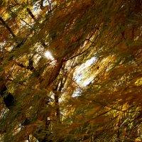 Осенний полдень. :: Aлександр **