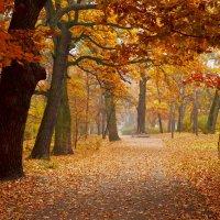 Дорога в Осень :: Svetlana Kravchenko